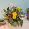ドライフラワーでお世話になっているcircoさんから可愛いお花を頂きました♪