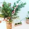 今週のgreenのお花のご紹介