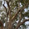 頭皮の血管は【木】と同じで末端にいくほど細くなっていきます